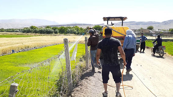 بر اساس مصوبات شورای حفاظت از منابع آب در شهرستان صحنه،  122 خزانه برنج امحاء شد